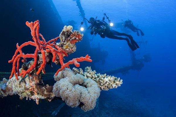 Diving in Aqaba